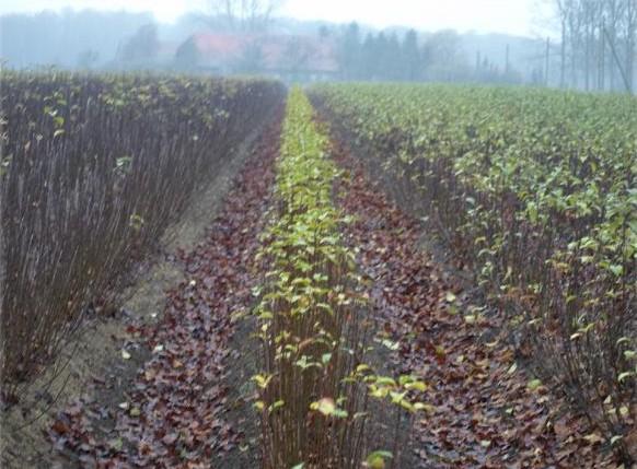 овощен разсадник агротейд