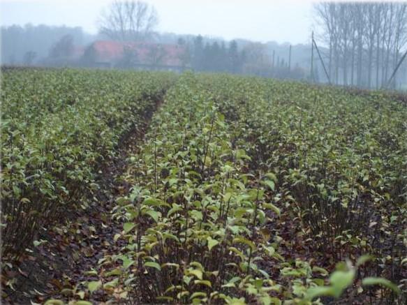 овощен разсадник агротрейд сливен